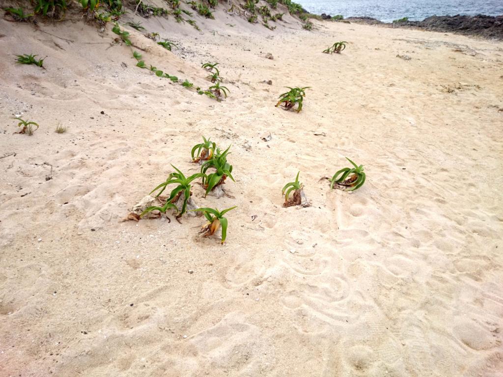 カベール岬3